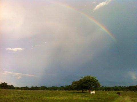 brisas rainbow